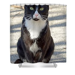 Alley Cat Shower Curtain by Lisa Phillips