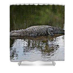 Alligator 1 Shower Curtain by Joe Faherty