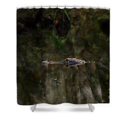Shower Curtain featuring the photograph Alligator In Swamp by Dan Friend