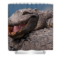 Shower Curtain featuring the photograph Alligator Smile by Art Whitton