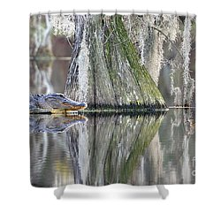 Shower Curtain featuring the photograph Alligator Waiting For Dinner by Dan Friend