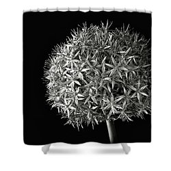 Shower Curtain featuring the photograph Allium In Black And White by Endre Balogh