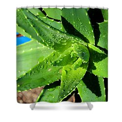 Aloe Shower Curtain by M Diane Bonaparte