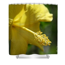 Alohalani Pua Melia Lei Manakai Shower Curtain by Sharon Mau