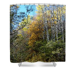 Shower Curtain featuring the photograph Along The Back Road by Vicki Pelham