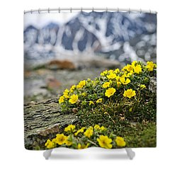 Alpine Meadow  Shower Curtain by Elena Elisseeva