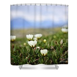 Alpine Meadow In Jasper National Park Shower Curtain by Elena Elisseeva