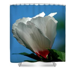 Althea Flower Shower Curtain by David Weeks
