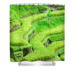 Shower Curtain featuring the photograph Amazing Rice Terrace Field by Luciano Mortula