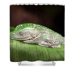 Amazon Leaf Frog Shower Curtain by Brad Granger