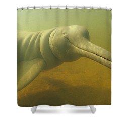 Amazon River Dolphin Portrait Brazil Shower Curtain by Flip Nicklin