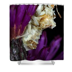Shower Curtain featuring the photograph Ambush Bug On Ironweed by Daniel Reed