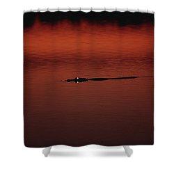 American Alligator Alligator Shower Curtain by Konrad Wothe