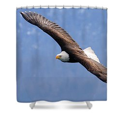Shower Curtain featuring the photograph American Bald Eagle by Doug Lloyd