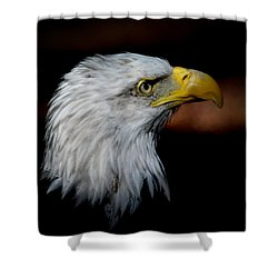 American Bald Eagle Shower Curtain by Steve McKinzie