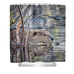 American Beaver Shower Curtain