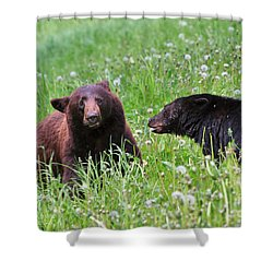 American Black Bear With Cub Shower Curtain by Louise Heusinkveld