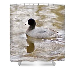 American Coot 1 Shower Curtain