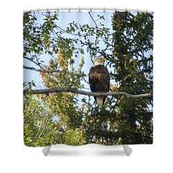 American Eagle Shower Curtain by Living Color Photography Lorraine Lynch