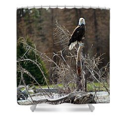 American Eagle On Snake River Shower Curtain by Living Color Photography Lorraine Lynch