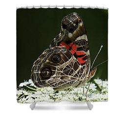 American Painted Lady Butterfly Shower Curtain
