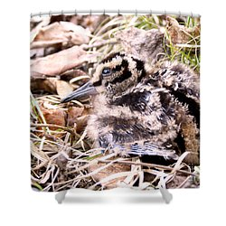American Woodcock Chick Shower Curtain by Angie Rea