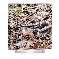 American Woodcock Chick No. 2 Shower Curtain by Angie Rea