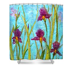Among The Wild Irises Shower Curtain by Carla Parris
