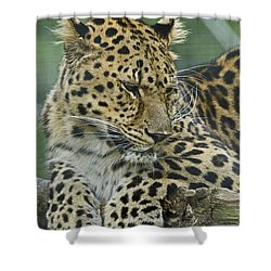 Amur Leopard Shower Curtain