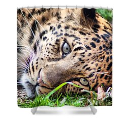 Shower Curtain featuring the photograph Amur Leopard by Lynne Jenkins