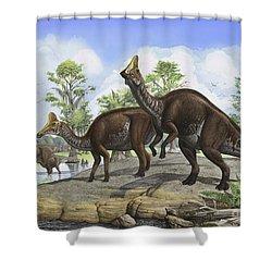 Amurosaurus Riabinini Dinosaurs Grazing Shower Curtain by Sergey Krasovskiy