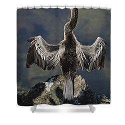 An American Anhinga Dries Its Wings Shower Curtain