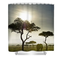An Elephant Walks Among The Trees Kenya Shower Curtain by David DuChemin