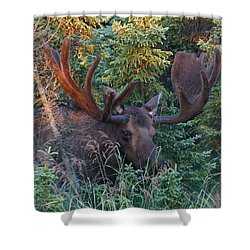 Shower Curtain featuring the photograph An Eye On You by Doug Lloyd