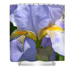An Iris In Spring Shower Curtain by P S
