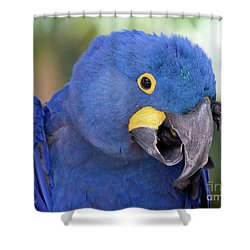 An Itch Shower Curtain