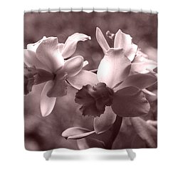 Shower Curtain featuring the photograph An Orchid Dream by Kerri Ligatich