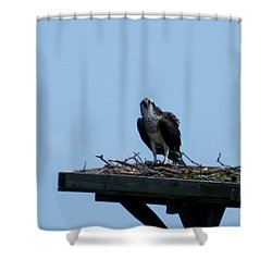 An Osprey In Maryland Shower Curtain