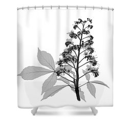 An X-ray Of A Chestnut Tree Flower Shower Curtain by Ted Kinsman