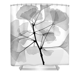 An X-ray Of Ginko Leaves Shower Curtain by Ted Kinsman