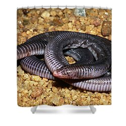 Anamaries Amphisbaenian Shower Curtain by Dante Fenolio