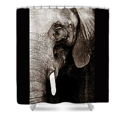 Ancient Face Shower Curtain by Angela Rath