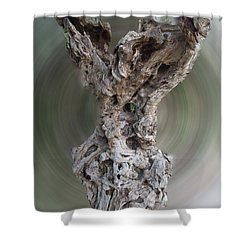 Ancient Old Olive Tree Shower Curtain by Colette V Hera  Guggenheim