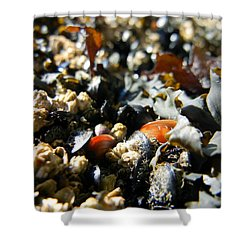 And Cockle Shells Shower Curtain