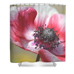 Anemone Flower Shower Curtain by P S