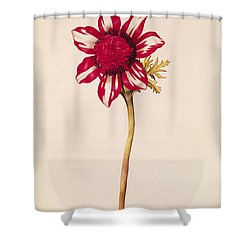 Anemone Shower Curtain by Nicolas Robert