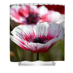 Anemones Shower Curtain by P S