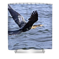 Anhinga In Flight Shower Curtain by Roger Wedegis