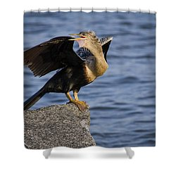 Anhinga Looking Back Shower Curtain by Roger Wedegis