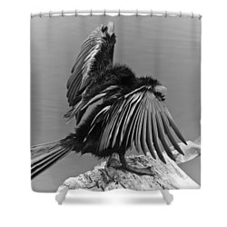 Anhinga Water Bird Shower Curtain by Carolyn Marshall